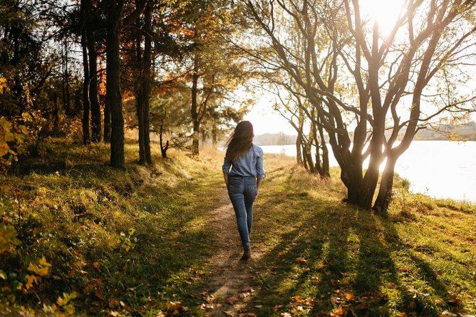 procházka les
